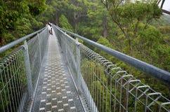 A treetop walk path Stock Photo