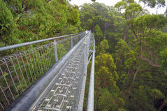 A treetop walk path Stock Images