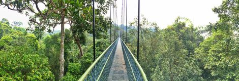 Treetop walk, Singapore Royalty Free Stock Photography