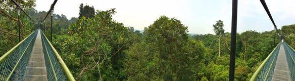Treetop walk, Singapore Stock Photography
