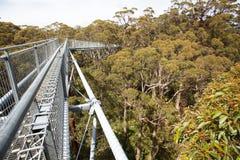 Treetop walking bridge Stock Photos