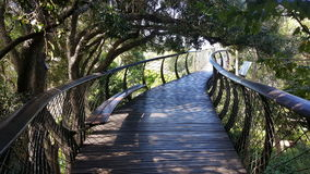 Treetop Walkway. A walk through the trees at Kirstenbosch Botanical Gardens, South Africans Royalty Free Stock Images