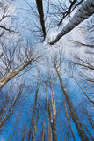 Treetop in winter Royalty Free Stock Images