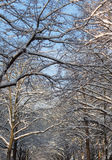 Treetop in winterscape Royalty Free Stock Images