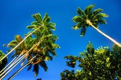 Treetopen av gömma i handflatan mot blå himmel Arkivbilder