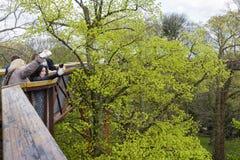 TreetopgångbanaKew trädgårdar Royaltyfri Bild