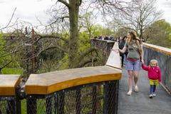 TreetopgångbanaKew trädgårdar Royaltyfria Bilder