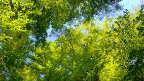 Treetops в красивом зеленом лесе сток-видео
