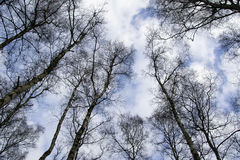 Treetops με έναν όμορφο ουρανό στοκ εικόνα