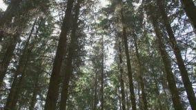 Treetops όπου ακτίνες ήλιων που λάμπουν κατευθείαν απόθεμα βίντεο