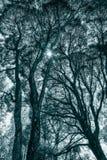 Treetops в черно-белом Стоковые Фотографии RF