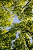 treetops Arkivbild