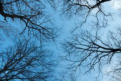 Treetops Stock Photos
