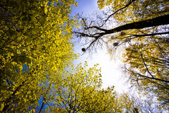 Treetops Royalty Free Stock Photography