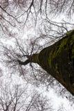 treetops Royalty-vrije Stock Afbeeldingen