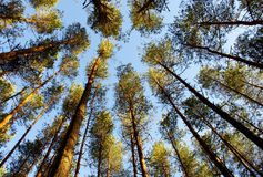 treetops Imagen de archivo
