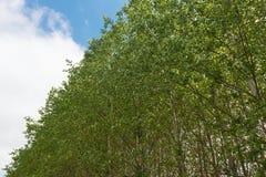 treetops Lizenzfreie Stockfotos
