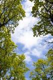 treetops Imagens de Stock Royalty Free