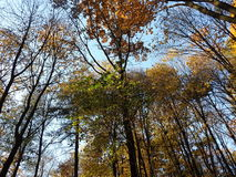 Treetops obrazy stock
