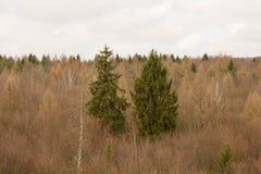 treetops Stockbilder