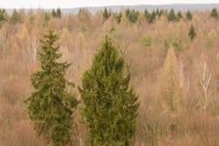 treetops Stockfotos