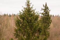 treetops Stockbild