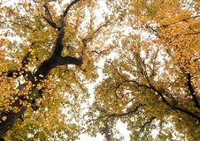 Treetops Stock Images