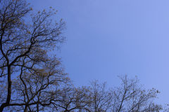 Treetops in autumn with blue sky Stock Photography
