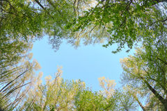 Treetops on a background of blue sky nature Royalty Free Stock Image