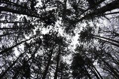 Treetops Royalty Free Stock Photos