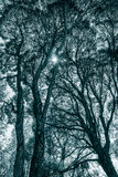 Treetops in black and white Royalty Free Stock Photos