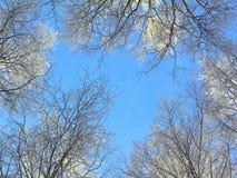Treetops and blue sky royalty free stock photo