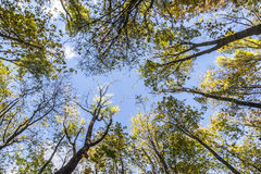Treetops in a circle under blue sky Stock Photo