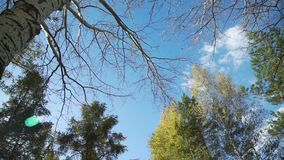 Blue Sky with Autumn Toptrees. Treetops with Colorful Leaves against the Blue Sky and Clouds in the Autumn stock video