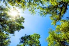 Treetops, die den sonnigen blauen Himmel gestalten Stockbilder