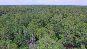 Treetops of a forest. Aerial footage of a forest in Central Florida stock video