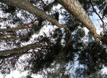 Treetops Stock Photography