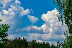 Treetops framing the sunny blue sky. Spring, forest.  Stock Photo