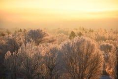 Treetops in Frosty Sunshine Lizenzfreie Stockfotos