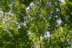 Treetops Royalty Free Stock Photography