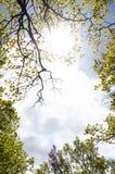 Treetops im Himmel Lizenzfreies Stockfoto