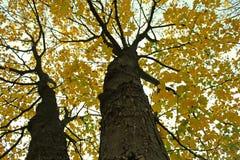 Treetops im Park auf Herbst Stockfotografie