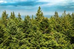 Treetops med blå himmel Arkivfoton