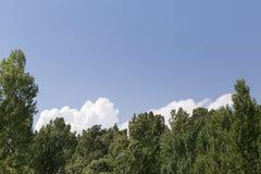 Treetops mit grünen Blättern Stockfotos