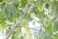 Treetops mit grünen Blättern Stockbilder