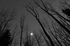 Treetops and moon at night in forest in Sweden. Europe Scandinavia. Beautiful black and white photo at night in the woods. Calm, peaceful and mystical Stock Images