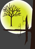 Treetops in the moonlight. Illustration Stock Photography