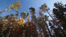 Treetops stock footage