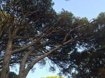 Treetops na słonecznym dniu zdjęcie stock