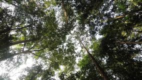 Treetops in the rain forrest north sulawesi, indonesia. Wide ground view of treetops in the rain forrest north sulawesi, indonesia stock footage
